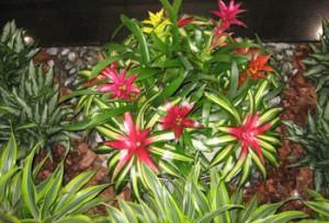 plants[1]