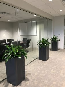 plants in black planters in conference office